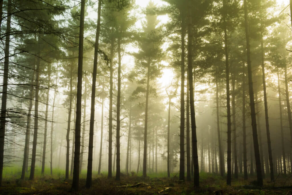Earth's carrying capacity for trees and the impact on climate change