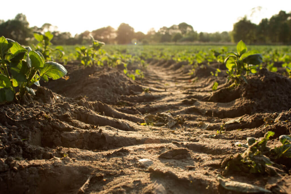 A balancing act: nutrient enrichment and soil carbon stocks
