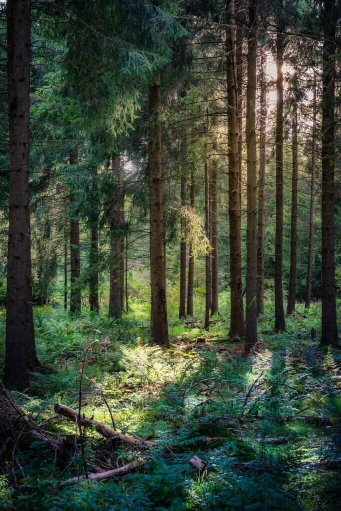 A Trillion Trees: How One Idea Triumphed Over Trump's Climate Denialism