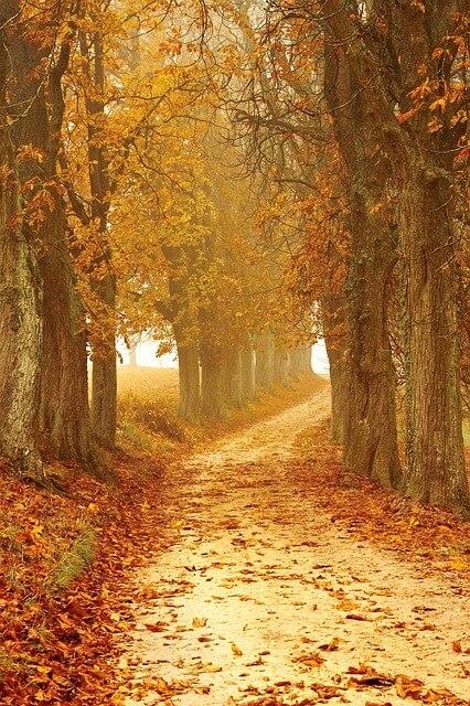 Forecasting autumn leaf senescence in deciduous trees