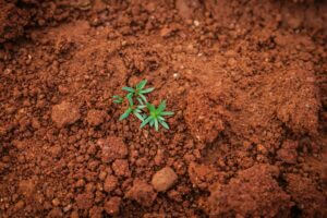 A view from above: the global soil community