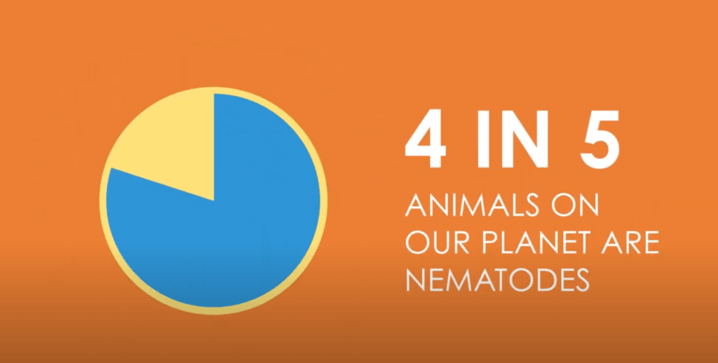 Learn more about nematodes with this overview
