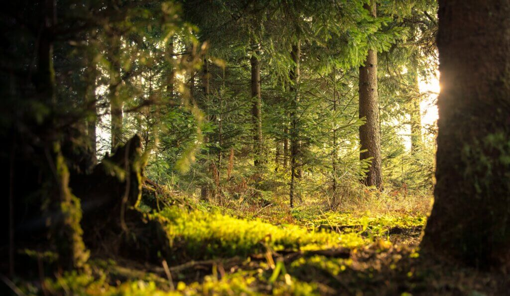 Scientists discover that the world contains dramatically more trees than previously thought